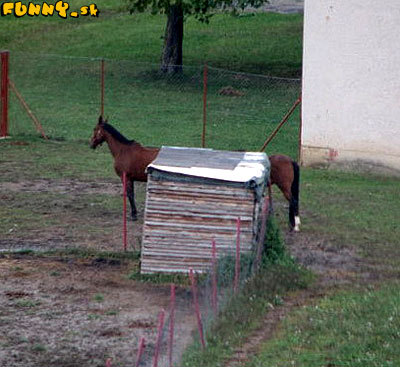 Kôň - prevedenie limuzína