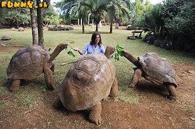 Kŕmenie korytnačiek