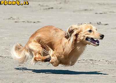 Lietajúci pes