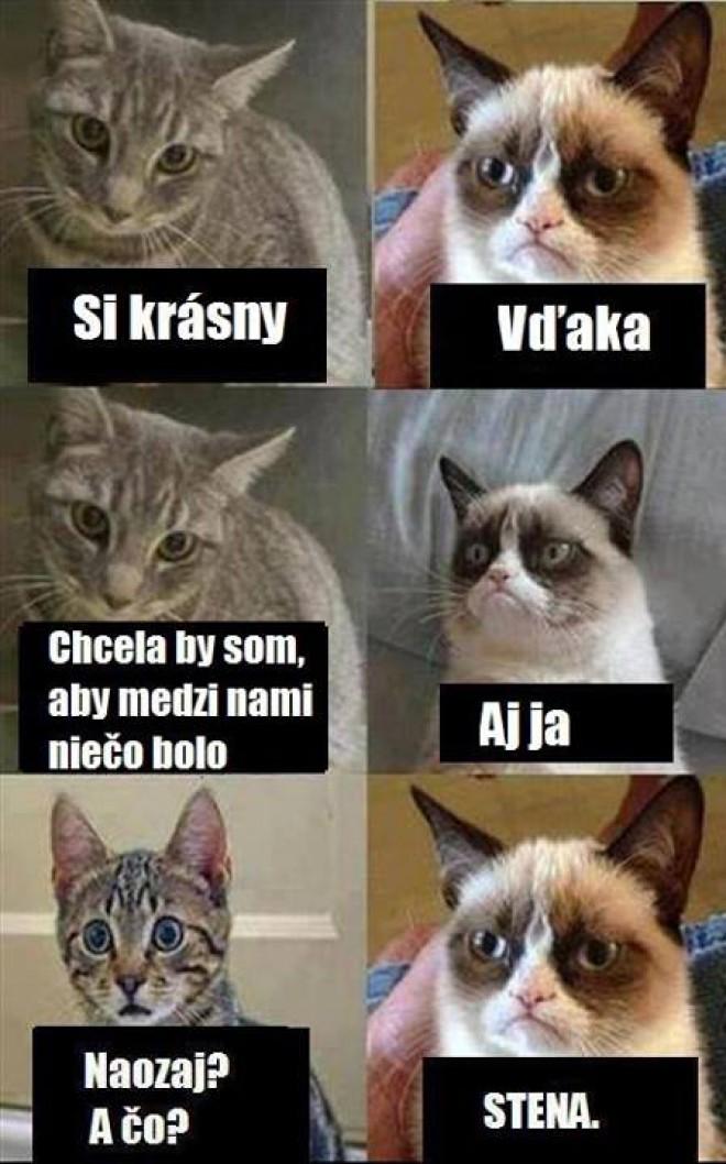Táto mačka ma vždy rozosmeje :)