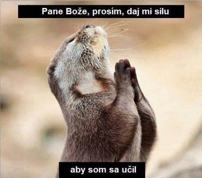Veľmi prosím :)